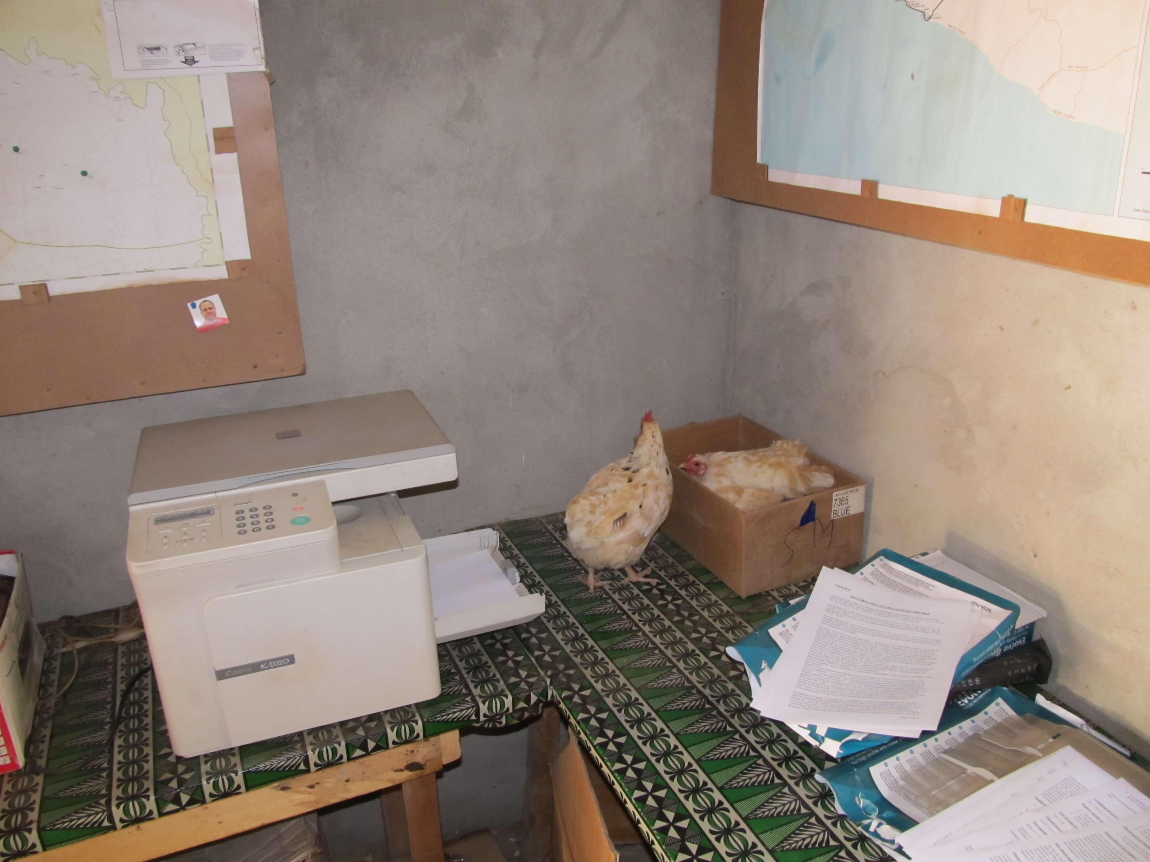 D'autres couvent dans les cartons de papier de l'imprimante !