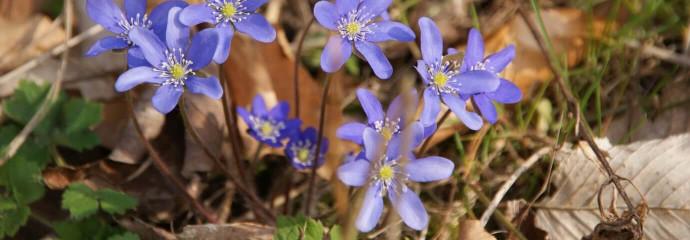 spring-2090417_1920