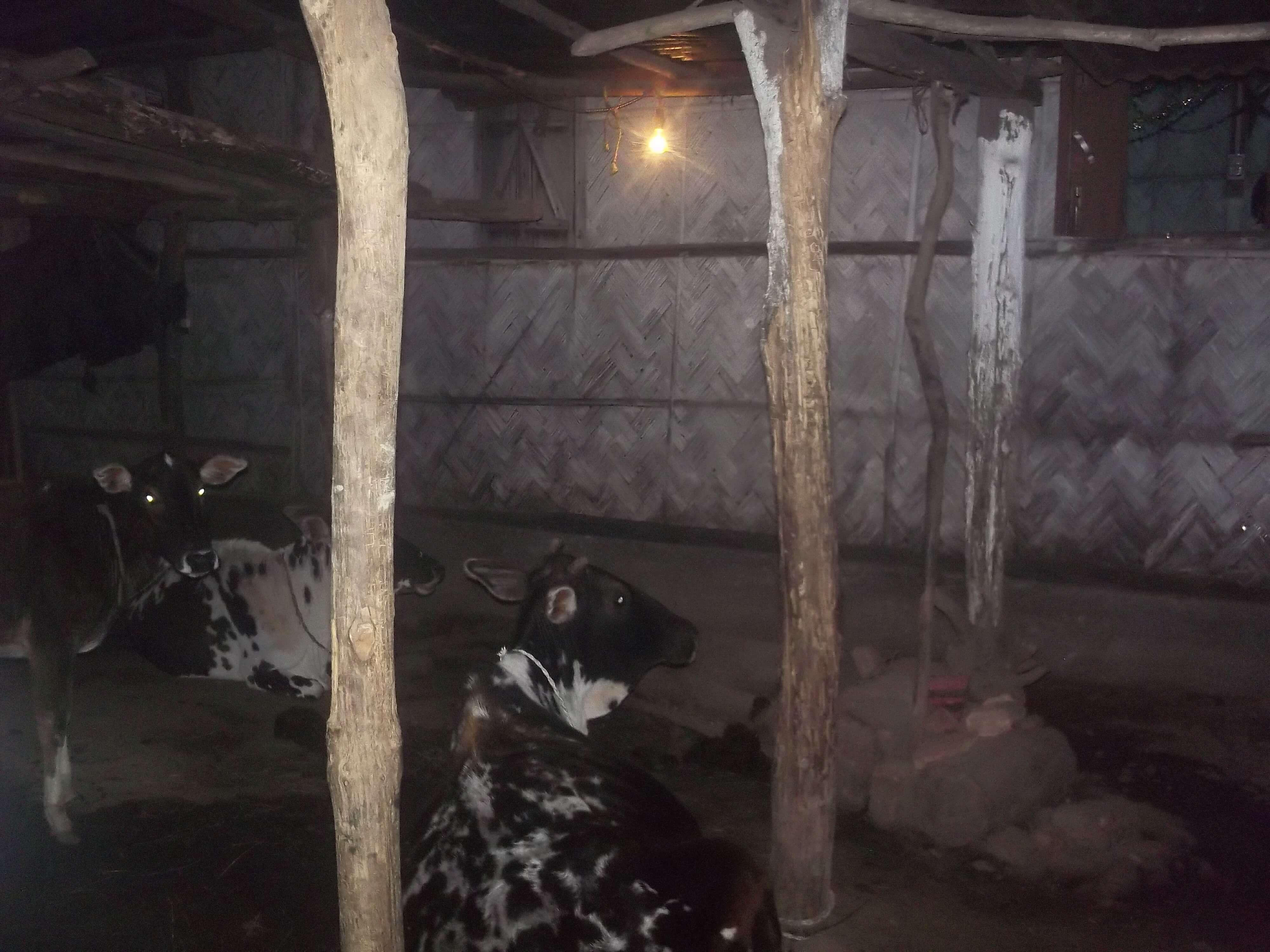 L'église provisoire se situe à côté d'une étable : pendant la réunion une vache a passé sa tête par